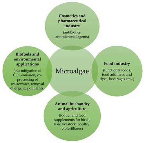 Figure 1. Application of microalgae in different fields.